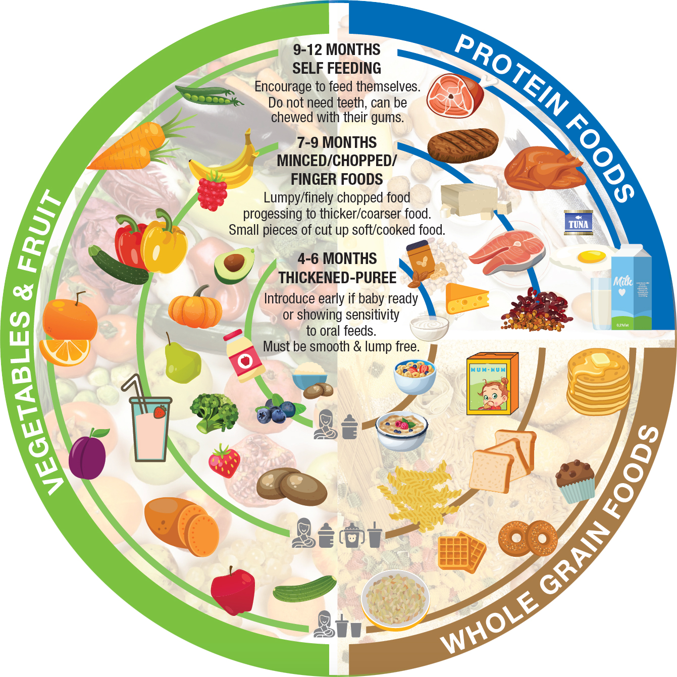 A circular diagram depicting the progression of food textures in baby's first year. Around 4-6 months: thickened-puree: Introduce early if baby ready or showing sensitivity to oral feeds. Most be smooth and lump free. Around 7-9 months: minced/chopped/finger foods. Lumpy/finely chopped food progressing to thicker/coarser food. Small pieces of cut up soft/cooked food. Around 9-12 months: self-feeding. Encourage to feed themselves. Do not need teeth, can be chewed with their gums.